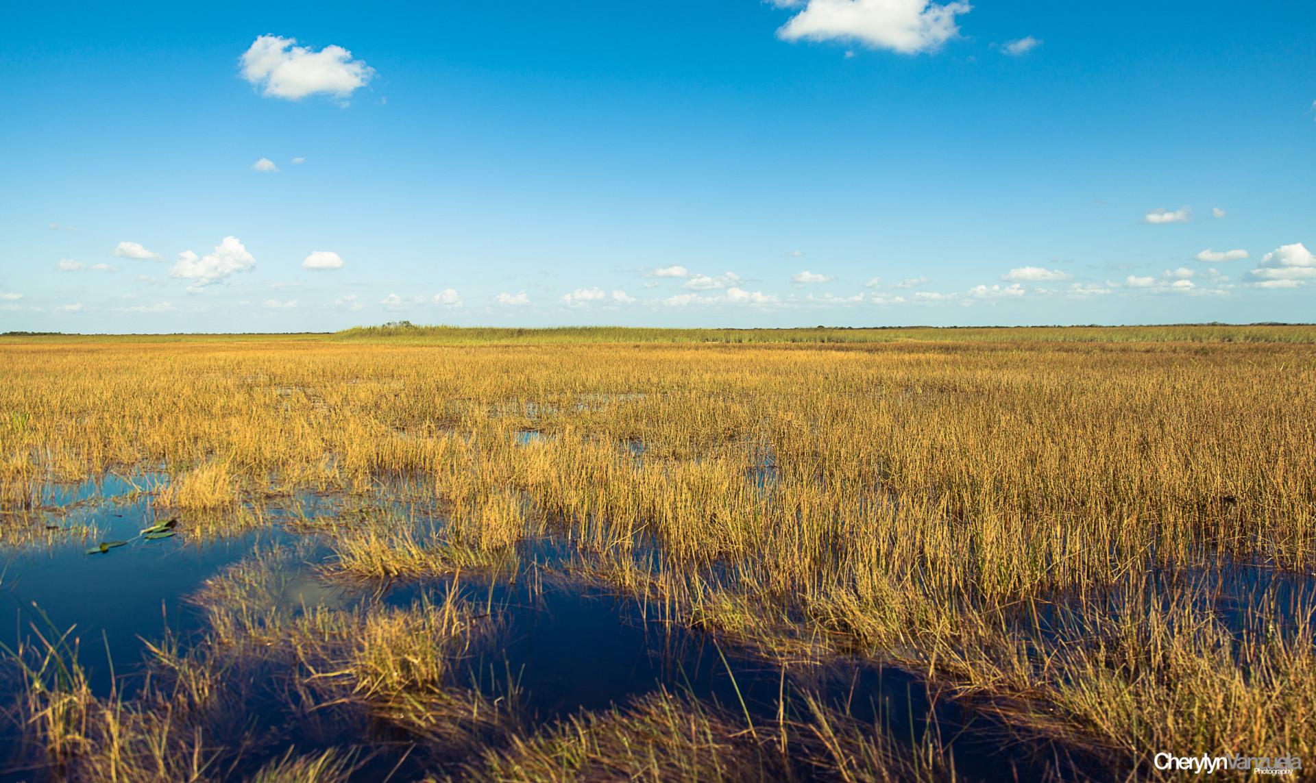 Everglades - USA